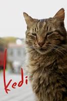 descargar JKedi Película Completa DVD [MEGA] [LATINO] gratis, Kedi Película Completa DVD [MEGA] [LATINO] online