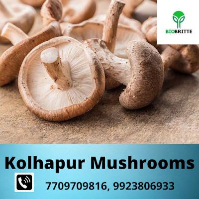 Shittake Mushroom Training