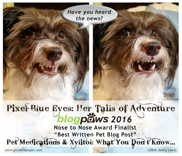 Pixel Blue Eyes: Her Tails of Adventure is finalist for 'Best Written Pet Blog Post' at BlogPaws 2016 Nose to Nose Awards