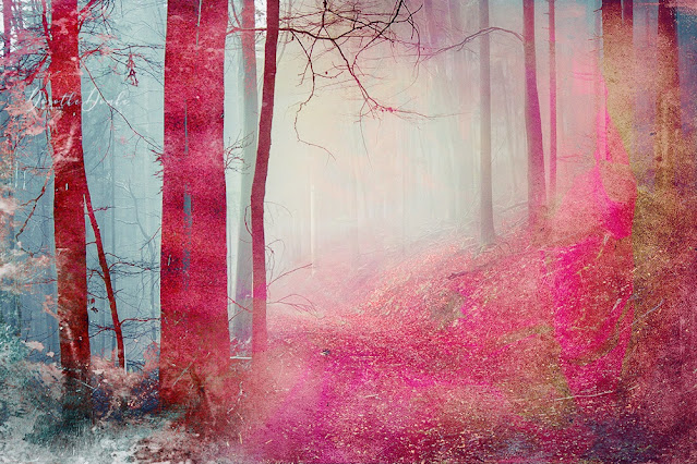 art, photoart, Fotokunst, Kunst, rosa Wald, Dorothe Domke