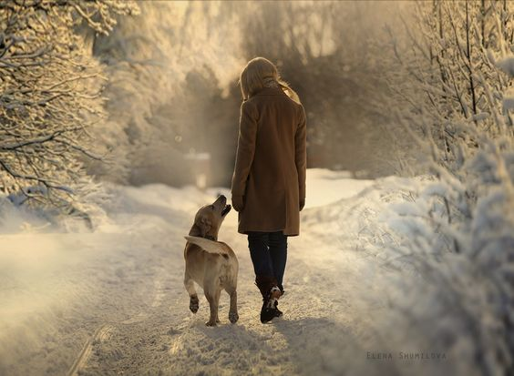 Beautiful winter scene with dog and woman on walk in snow