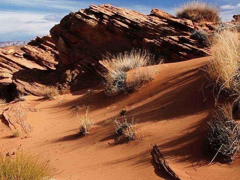 Desert Biome Description