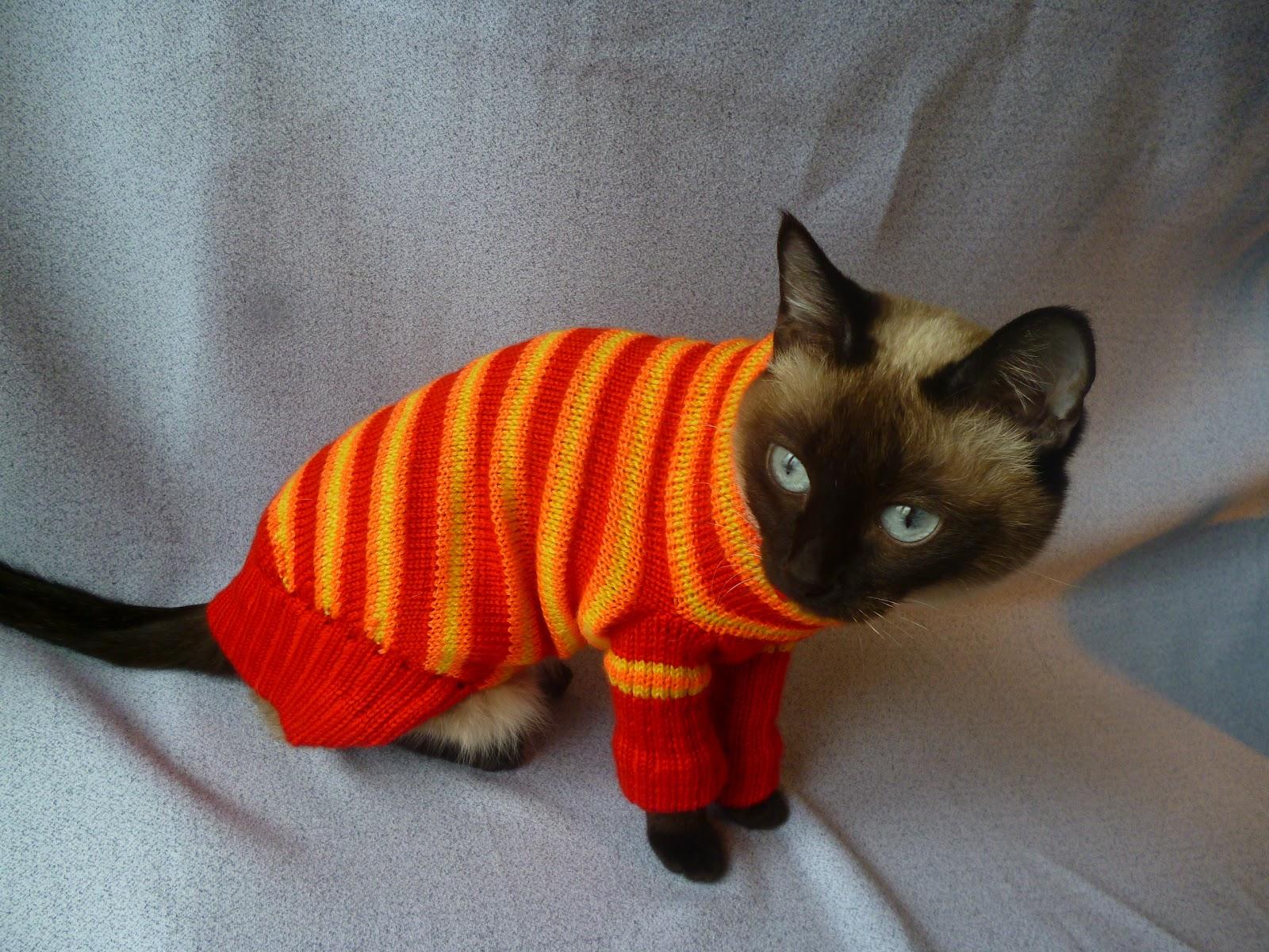 одежда для кошек и собак на заказ в нижнем новгороде мои новые