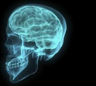 TOP 51 Amazing Interesting Facts About Human Brain and Anotomy.