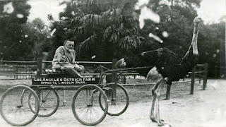 Charles Steinmetz seated in a wagon that is pulled by an ostrich