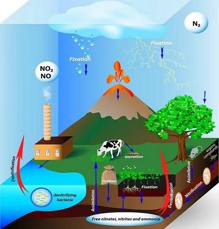Ecosystem-paritantra