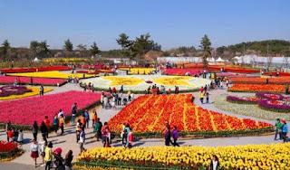 Festival Tulip Taean