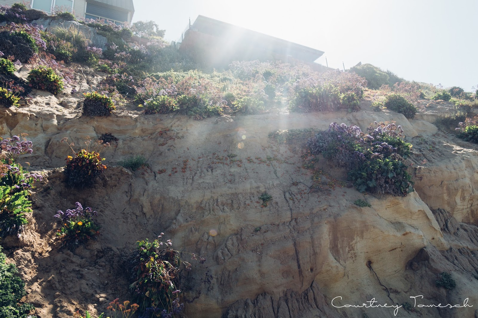 Courtney Tomesch Exploring Self Realization Fellowship and Moonlight Beach
