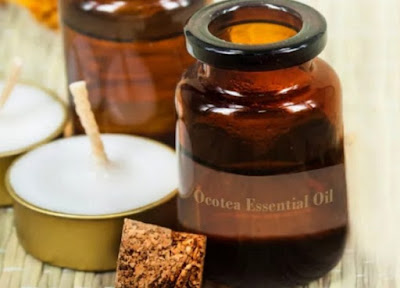 Effectively Ocotea Oil to Handle Diabetes