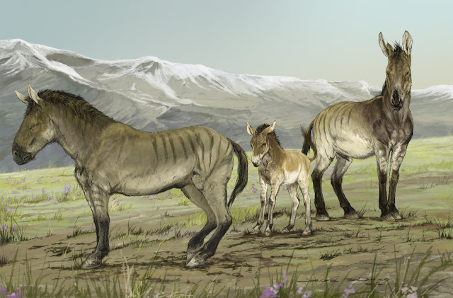 Analysis of ancient DNA reveals a previously unrecognized genus of extinct horses that once roamed North America