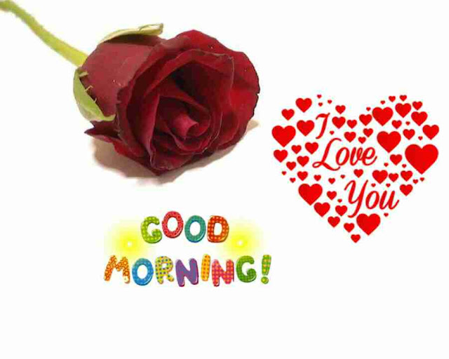 Awesome good morning image with red rose flower