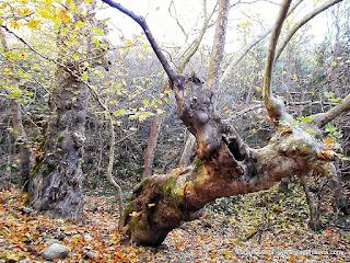 Relato de viagem à surpreendente região de Meteora, na Grécia, cidades de Kalampaka e Kastraki e seus maravilhosos monastérios.