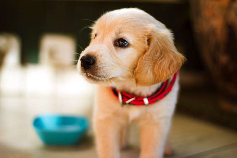 How to Train Your Puppy for Good Behavior