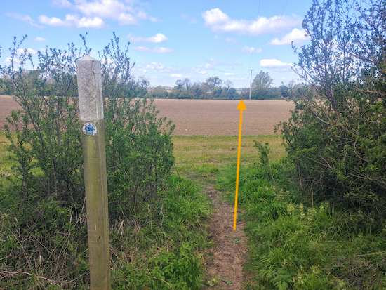 Head to the left of the telegraph pole