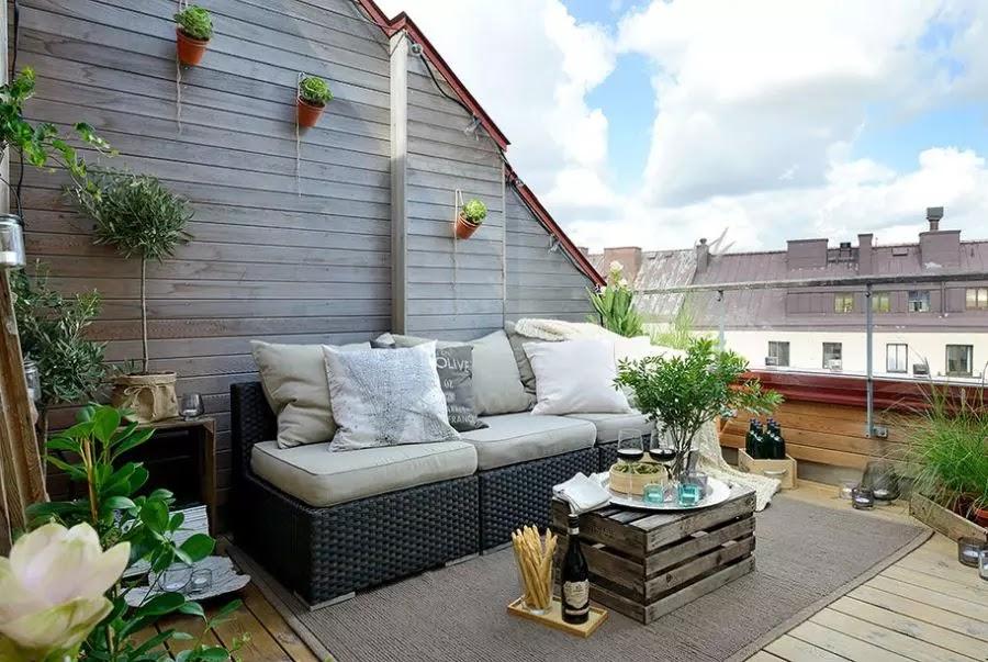 çatı-teras-bitkileri-nasıl-bakılır