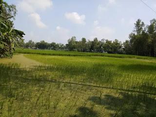 Village crop field pictures in Bangladesh