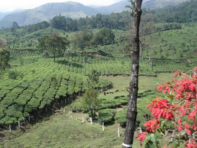 Best season to visit Munnar