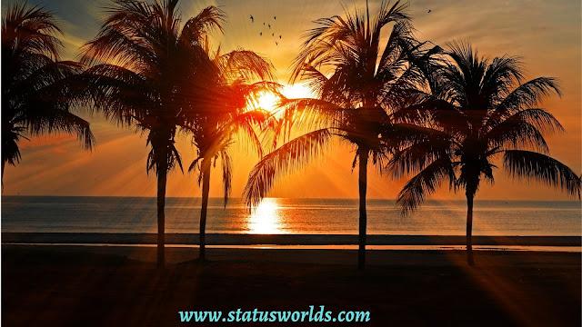 Sunshine Status, Captions, And Quotes