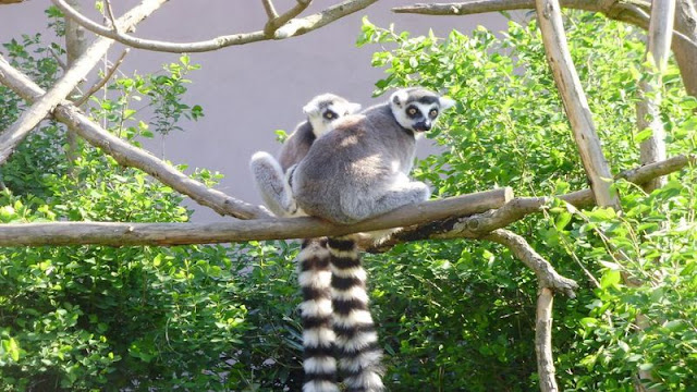 Zoo Plzeň na portálu plzen.cz