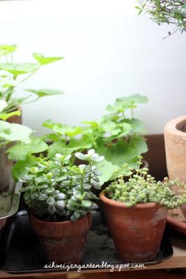 Zimmerpflanzen Dunkel zimmerpflanzen für dunkle ecken die schönsten einrichtungsideen