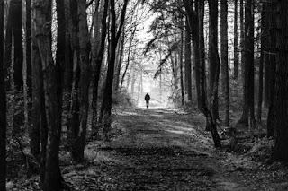 Dark Trail - Photo by Sander Mathlener on Unsplash