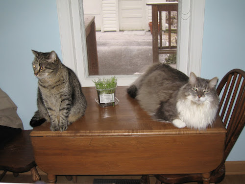 A table with two cats sitting on it.