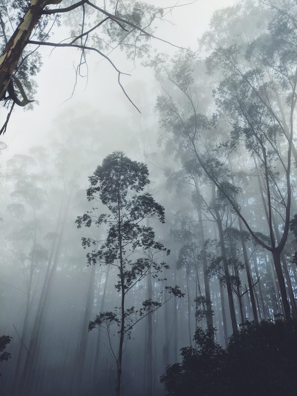 اشجار في غابة مسحورة و خلفية زرقاء - خلفيات ايفون X