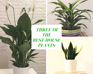 Three of the best house plants