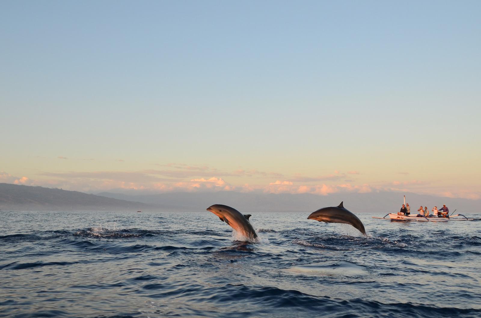 https://www.dolphinesse.com/p/escapade-bien-etre-dauphins-sauvages.html