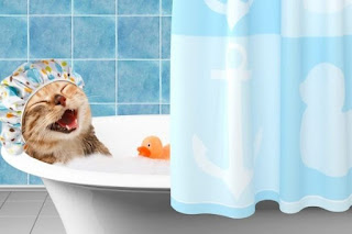 cara memandikan kucing anggora di rumah