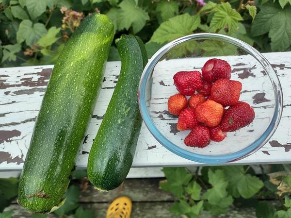 avling squash jordbær