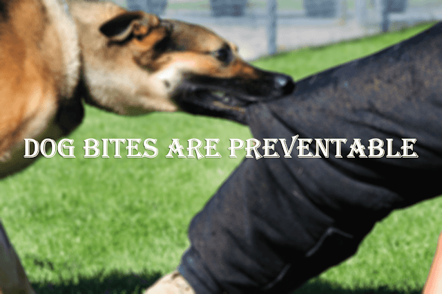 Dog Bites Are Preventable