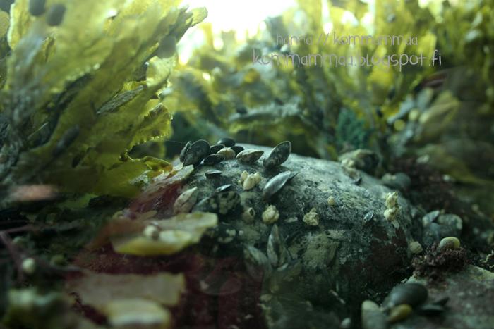 kasnäs sinisimpukka luontokeskus veden alla