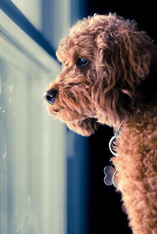 Nature Recipe Dog Food Calories Per Cup