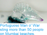https://sciencythoughts.blogspot.com/2018/08/portuguese-man-o-war-sting-more-than-50.html