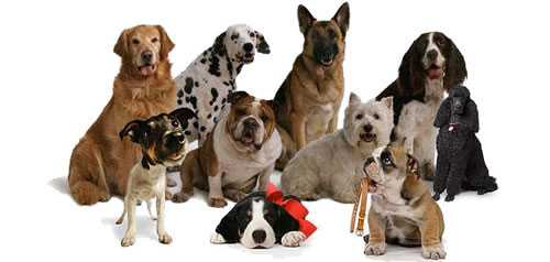 cães mais amorosos do mundo blog Tudo Sobre Tudo