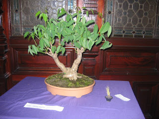 http://aubonsai.blogspot.com/2006/11/matsuri-bonsai-2006.html