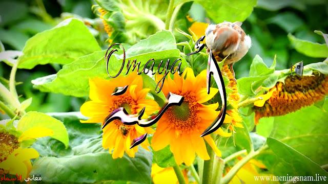 معنى اسم امية وصفات حاملة و حامل هذا الاسم Omaya
