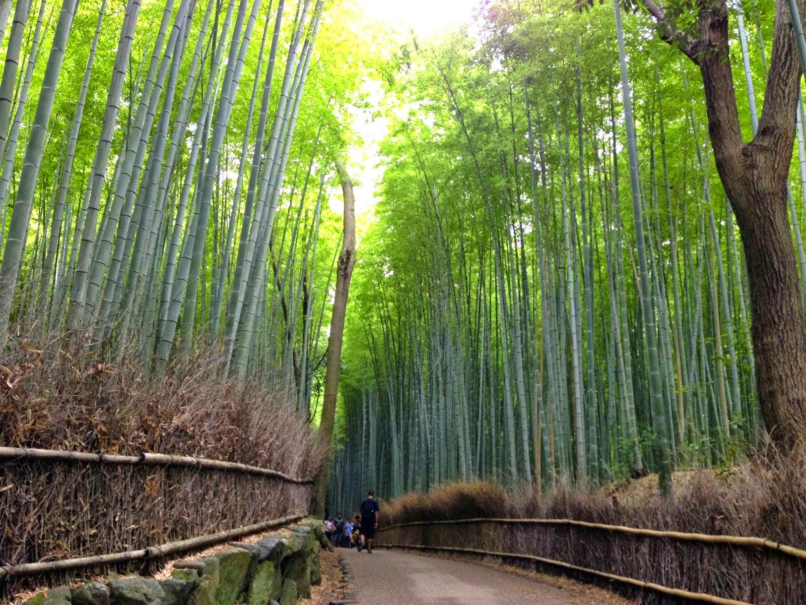 Bamboo Grove Arashiyama Kyoto