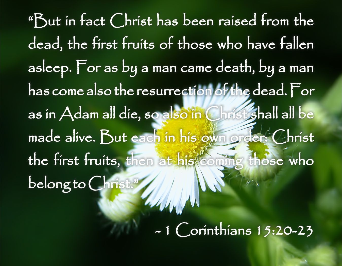 Death Quotes: Tagalog Prayers And Christian Quotes: Bible Quotes About