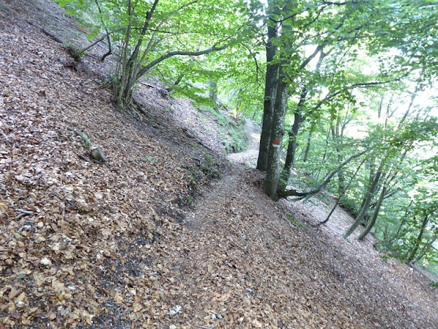sentiero sotto monte teggia che porta rifugio amandoli