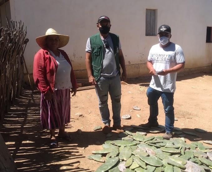 Secretaria de Agricultura de Amparo inicia Programa de Distribuição de Palma Forrageira