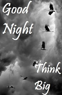 the good night bird