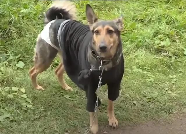 В Уфе ищут нового владельца для собаки, над которой жестко измывался хозяин-извращенец