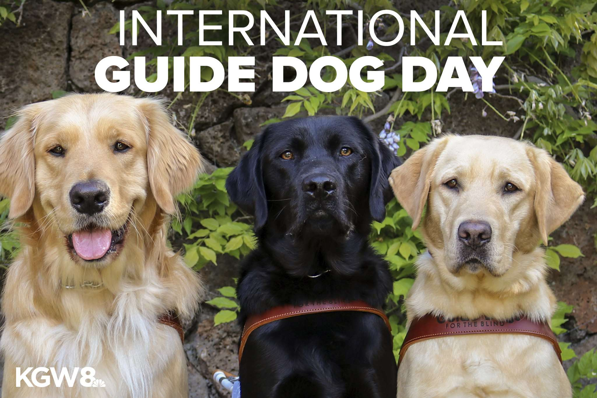 International Guide Dog Day Wishes
