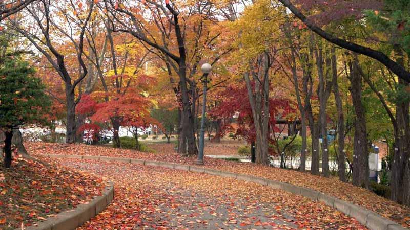 Tempat Wisata di Korea Selatan Saat Musim Gugur