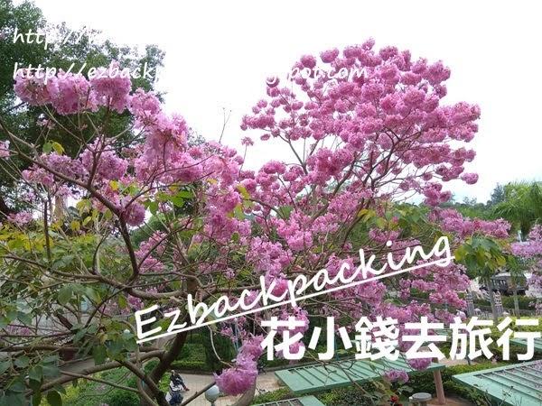 香港春天賞花