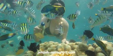 aktivitas snorkeling pulau perak