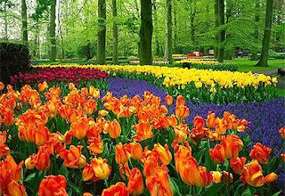 รูปแต่งบ้านสวนดอกไม้