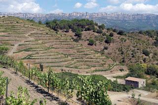 Terraced vineyard in Priorat